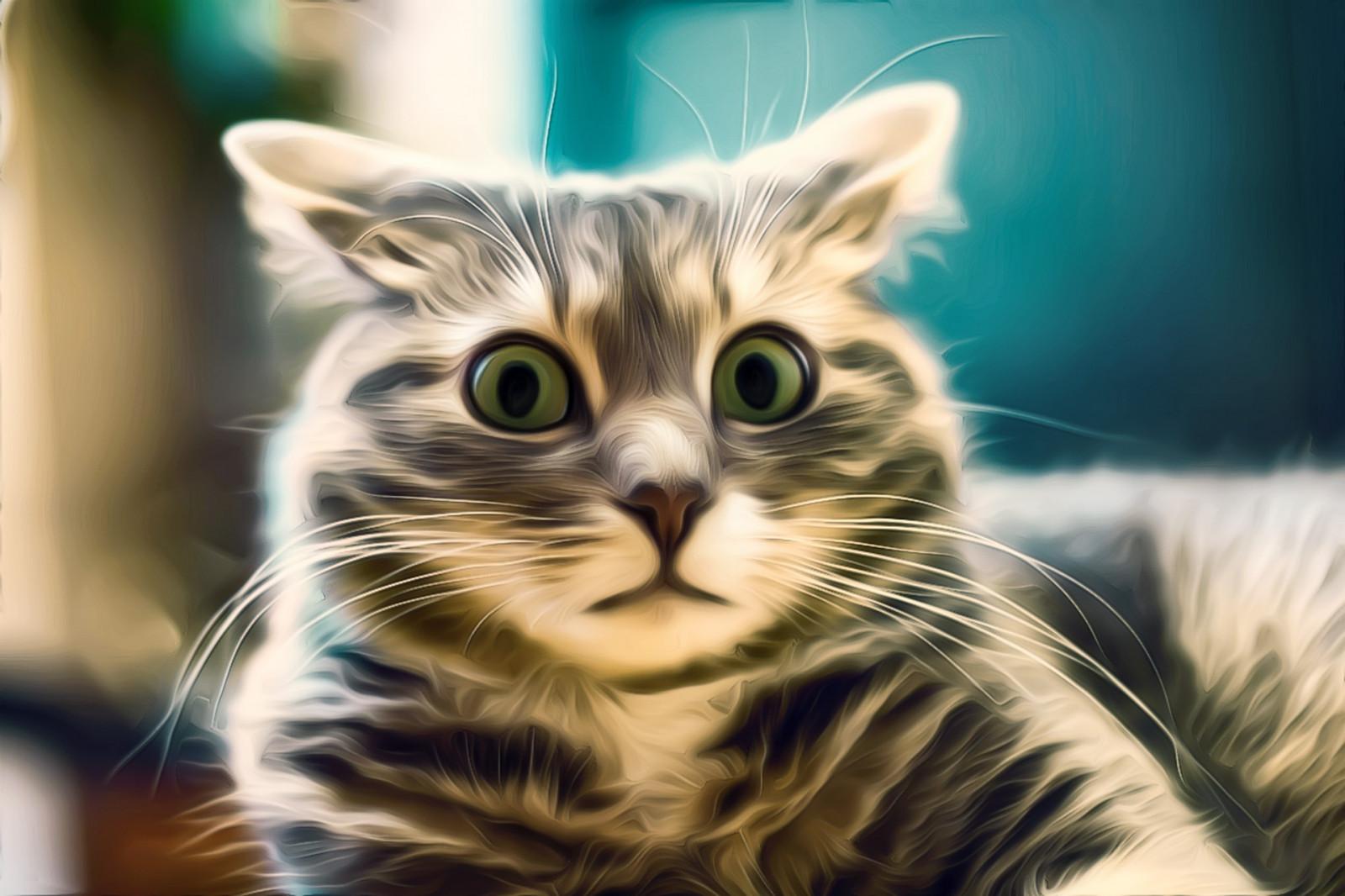 Снова к вопросу о котах: приколы про котов