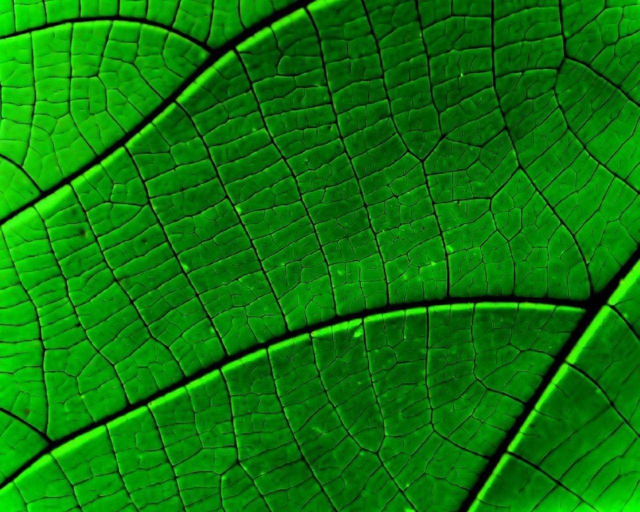 Fondos de pantalla : agua, césped, simetría, verde, patrón, textura ...