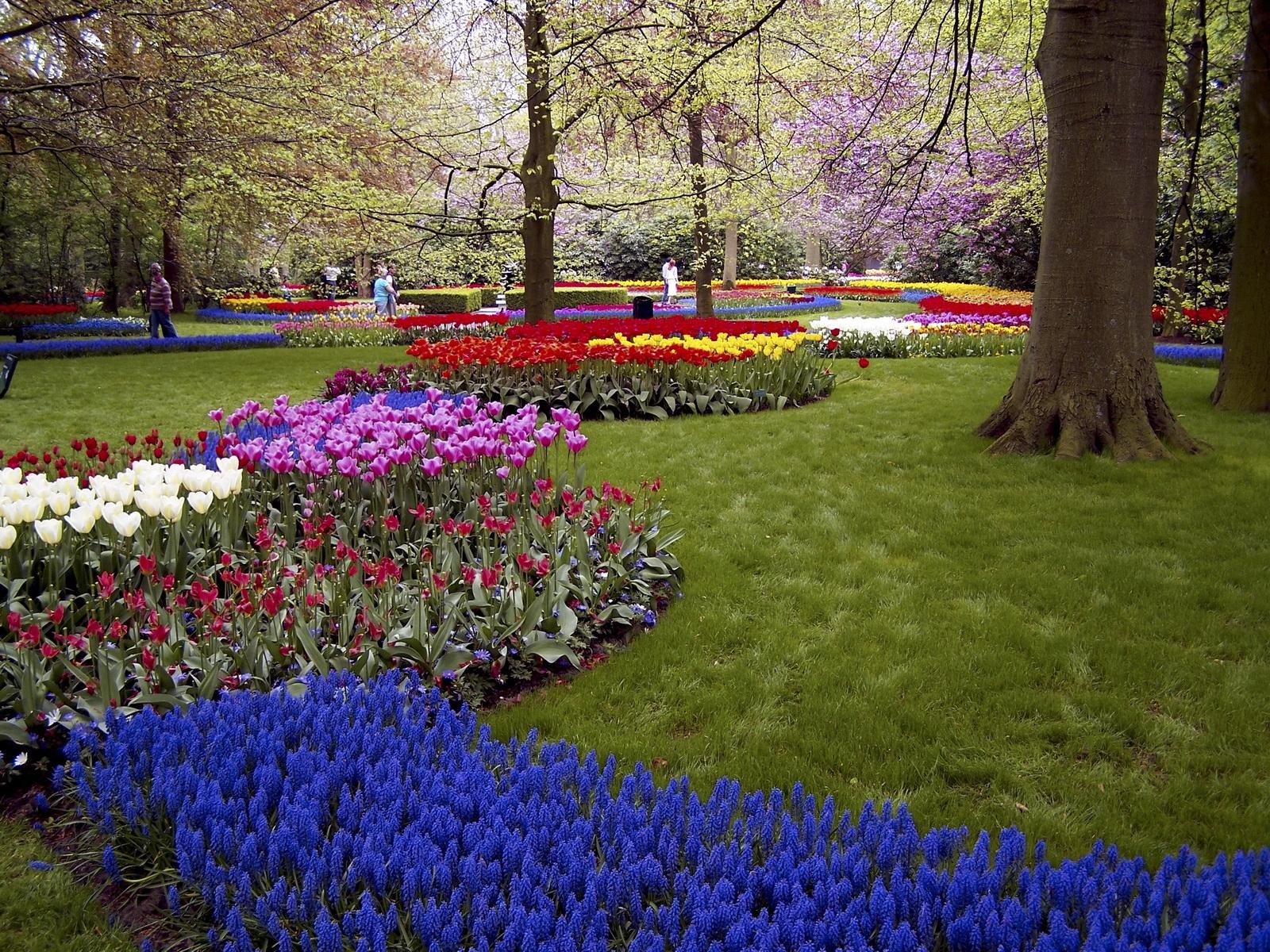 картинки газон с цветами познакомилась