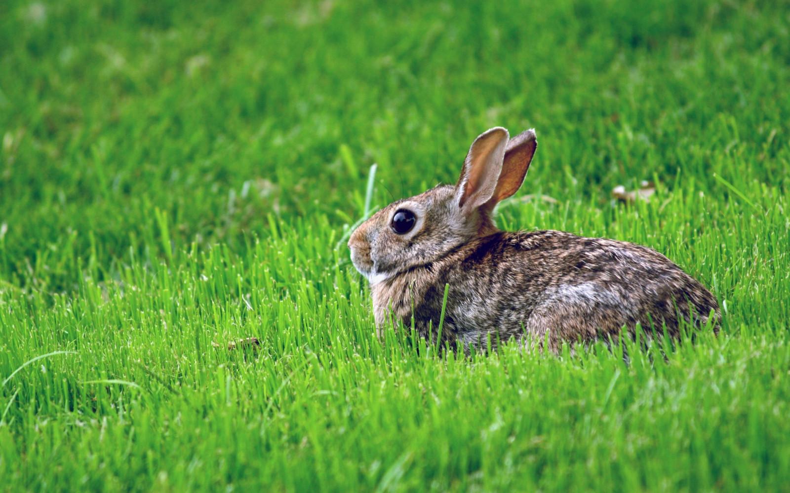 Картинка с зайчатами, открытка