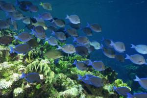hintergrundbilder : tiere, meer, fisch, unterwasser, koralle, korallenriff, biologie, ozean
