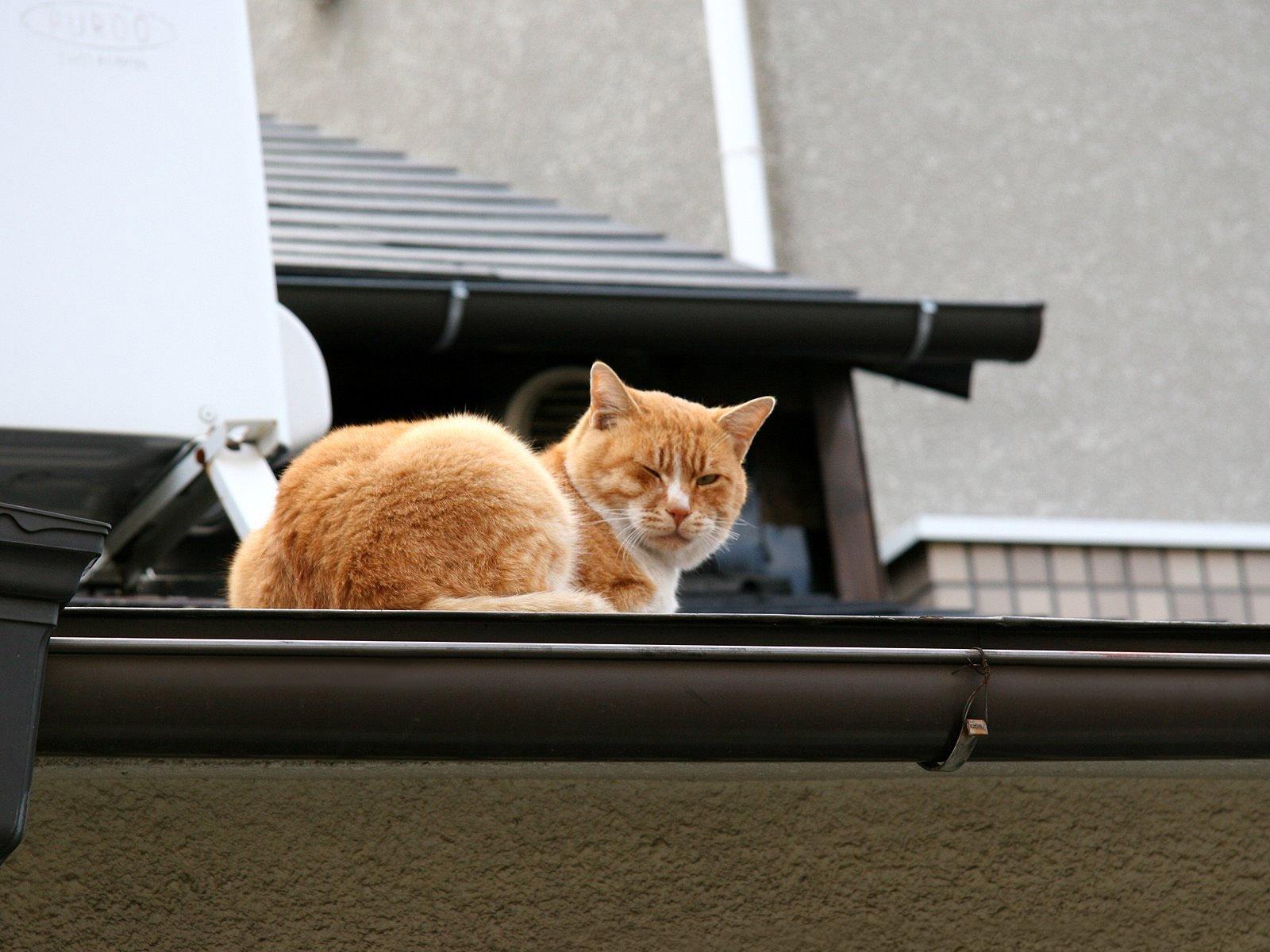Картинка котенка на крыше