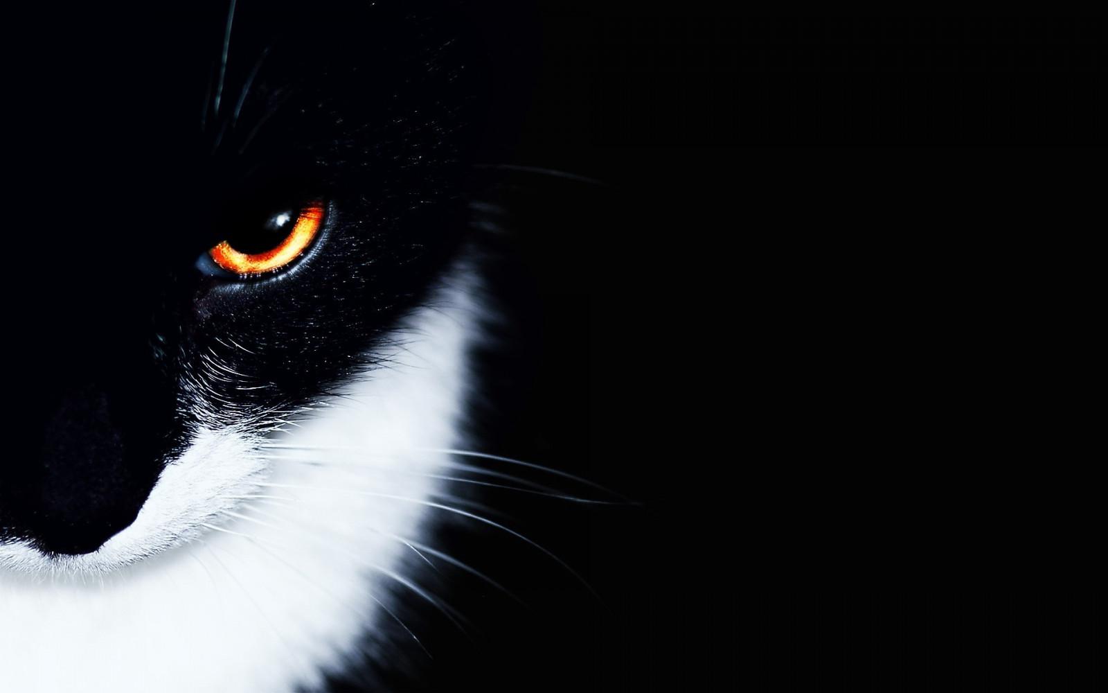 обои на рабочий стол глаза кошки на темном фоне № 238003 без смс