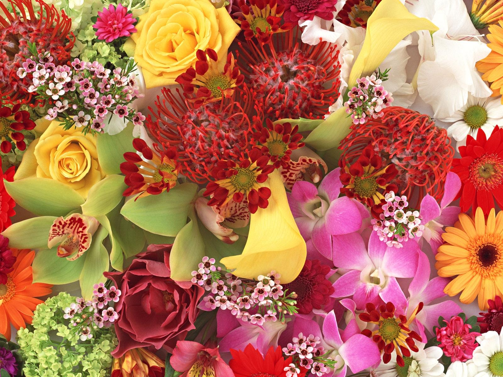 Прикольные поздравления, красивые открытки цветы картинки