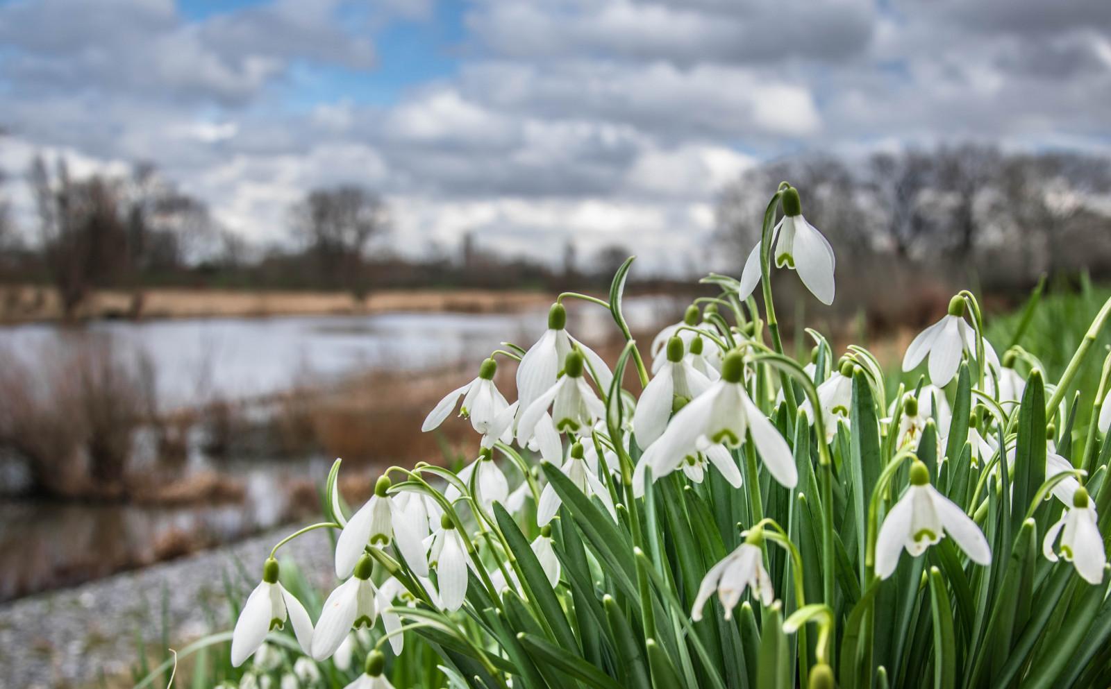 Весна фото красивые природа россии, поздравления картинках стихи