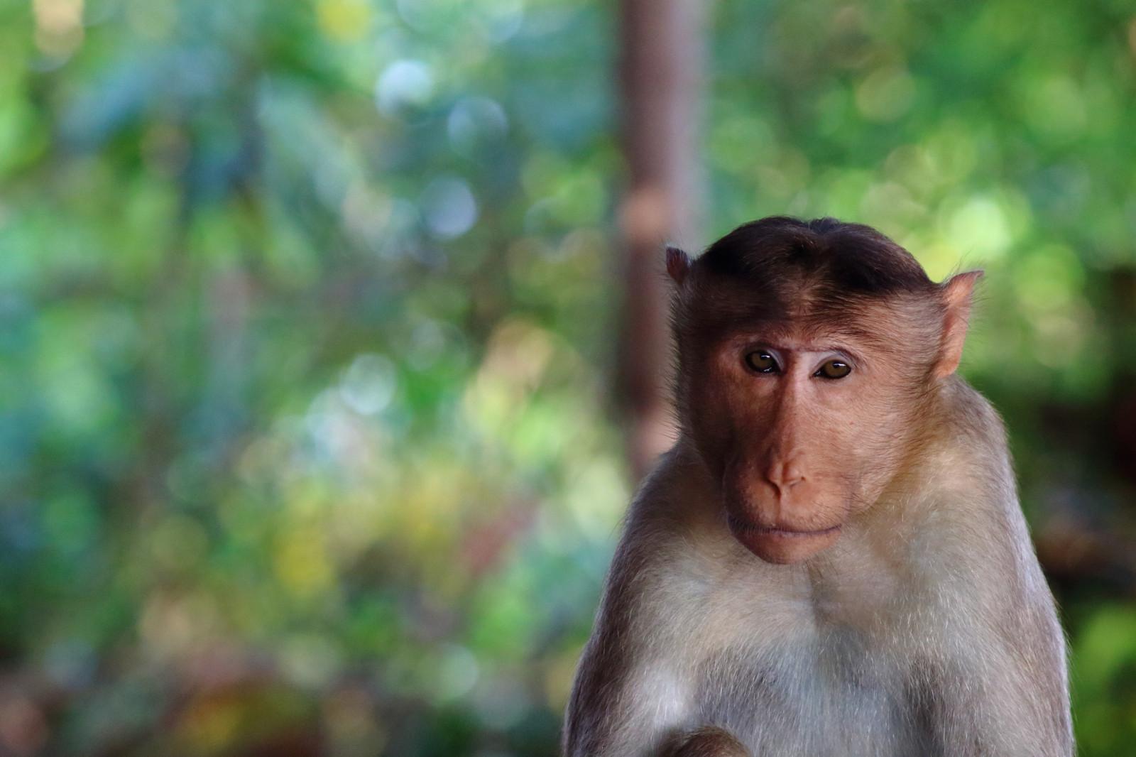 Открыткой, картинки с изображением обезьян