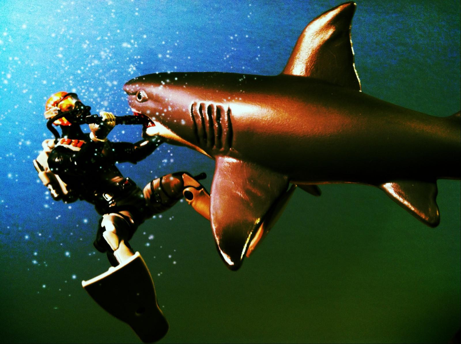 Hintergrundbilder : Weiß, Meer, Wasser, Mannschaft, Unterwasser ...