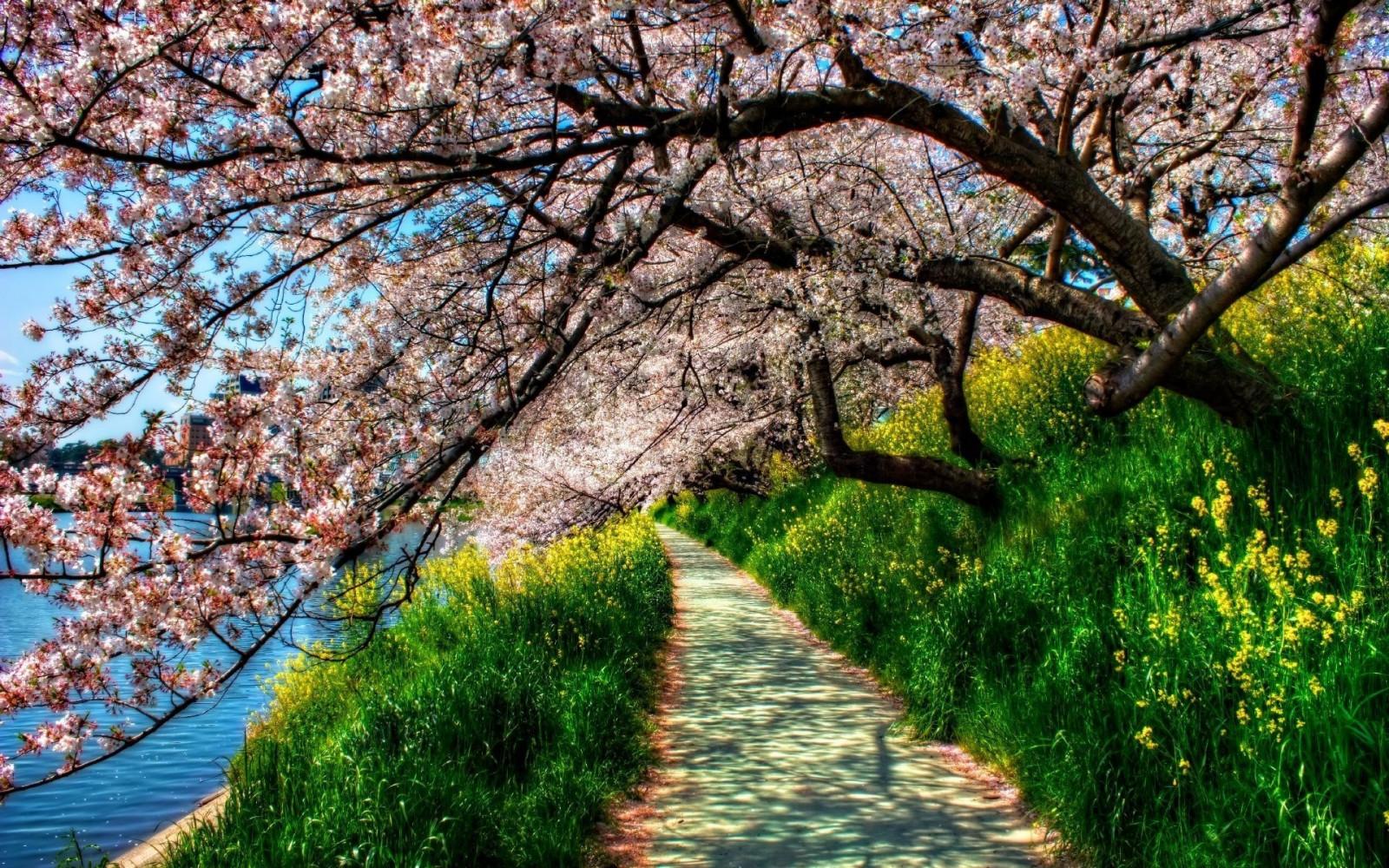 В статье рассмотрим, к чему снится видеть дерево во сне, по нескольким известным толкователям.