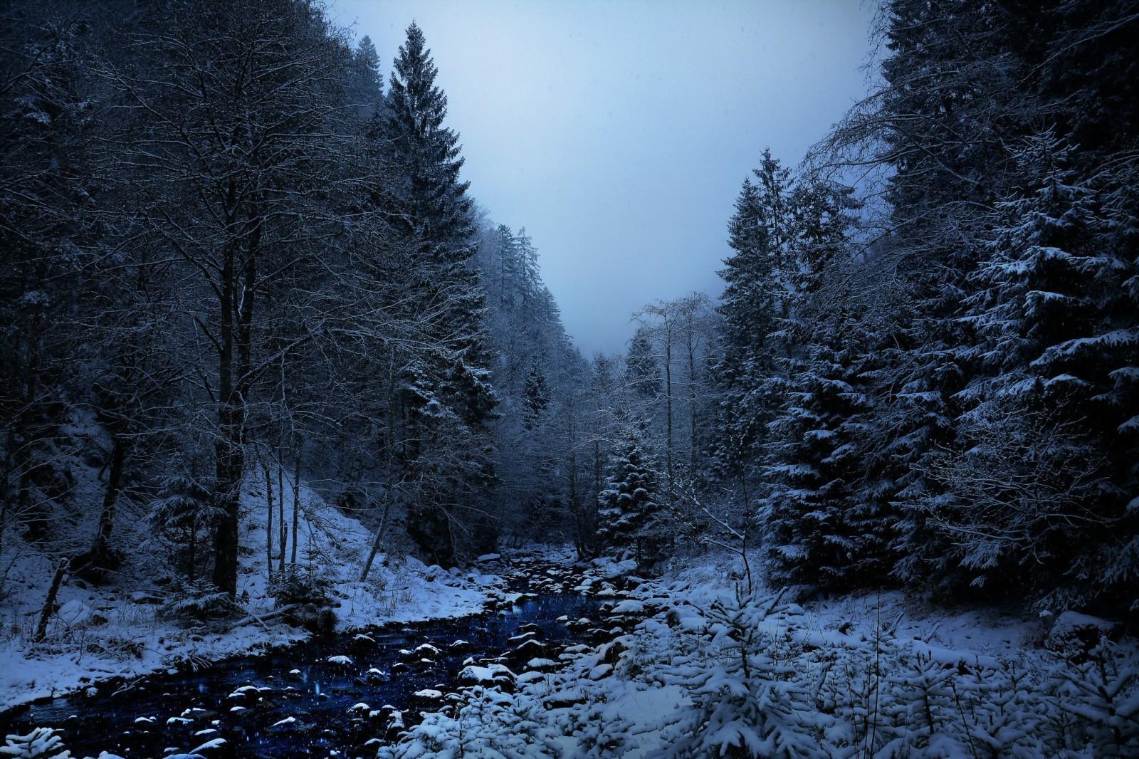 фото лес зима полночь борисовна даёт