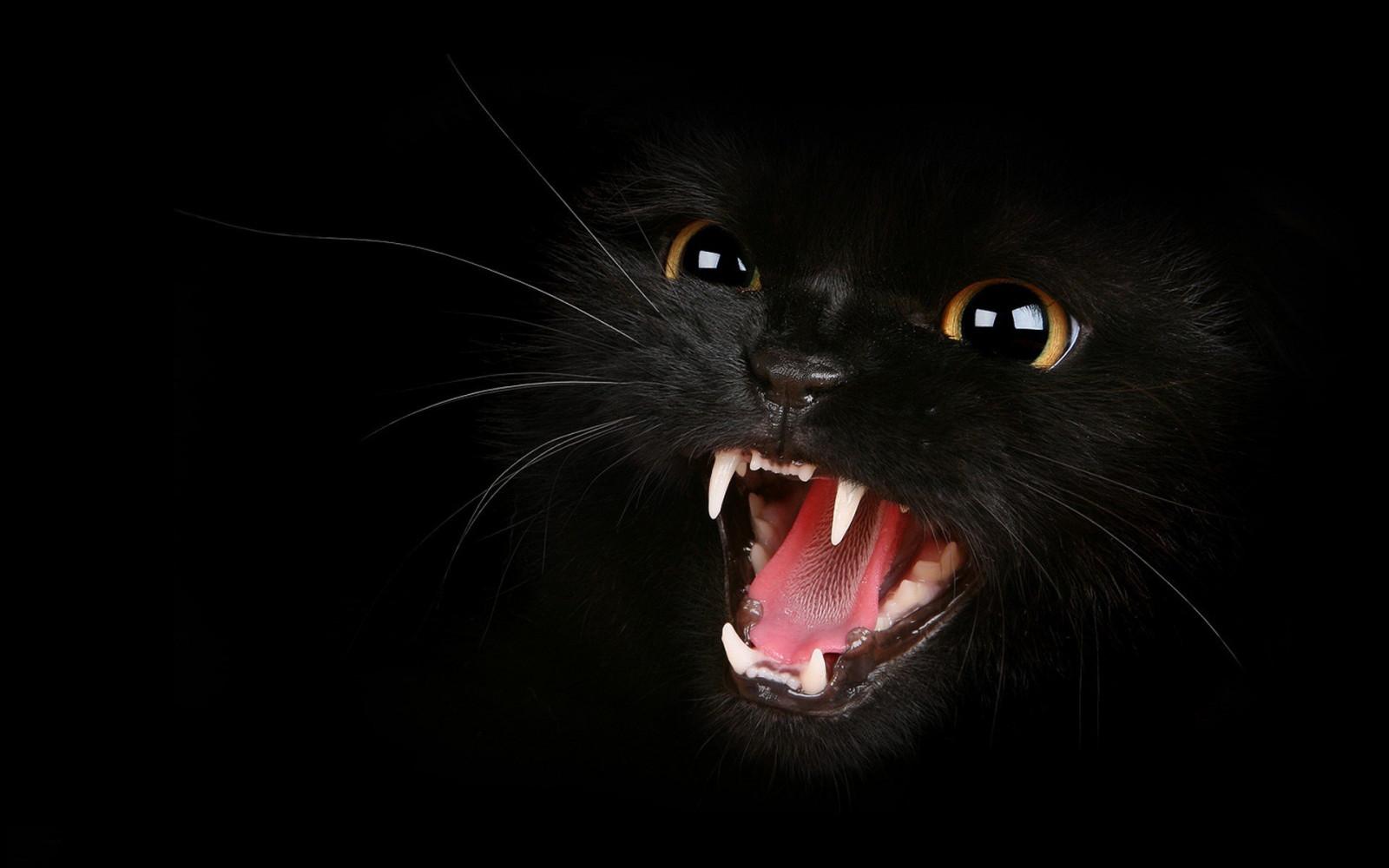обои на рабочий стол черные кошки на черном фоне № 154894 без смс