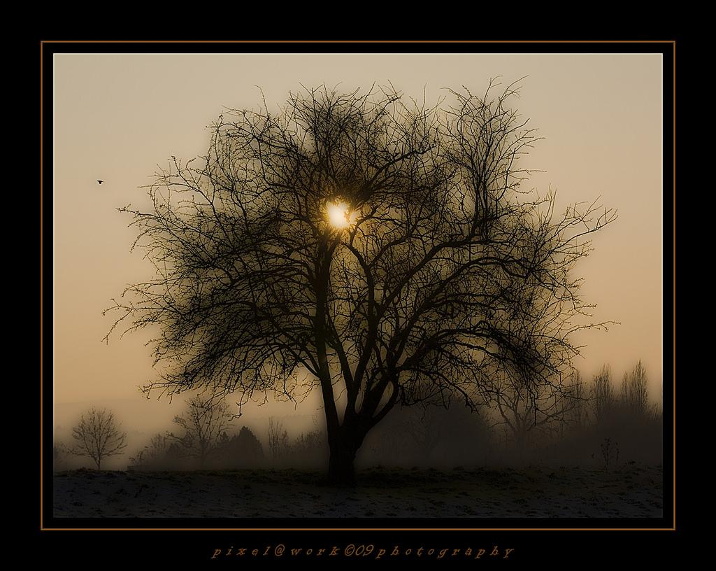 Fondos de pantalla : luz de sol, Árboles, paisaje, Photoshop, 500 px ...