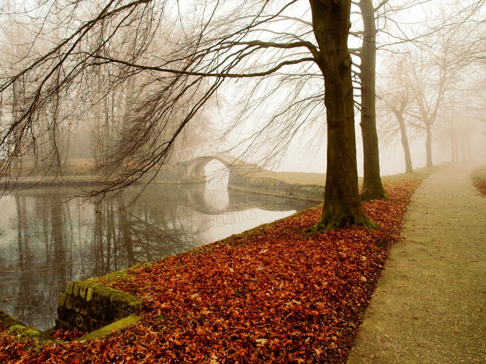 Sonnenlicht Bäume Wald Natur Betrachtung Gras Park Winter Ast Morgen Nebel Brücke Laub Baum Herbst Nebel