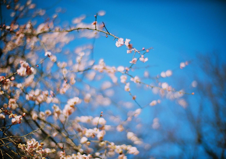 Zeiss Mit Entfernungsmesser : Hintergrundbilder leica blume film japan analoge zeiss