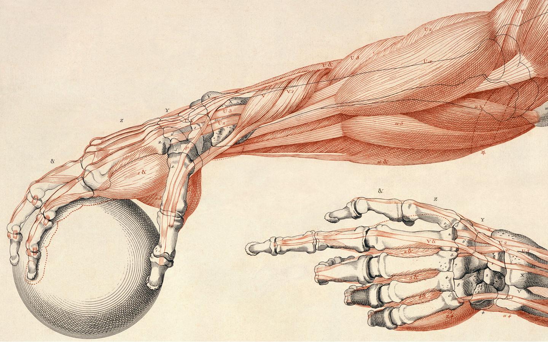 Hintergrundbilder : Illustration, Karikatur, Knochen, Wissenschaft ...