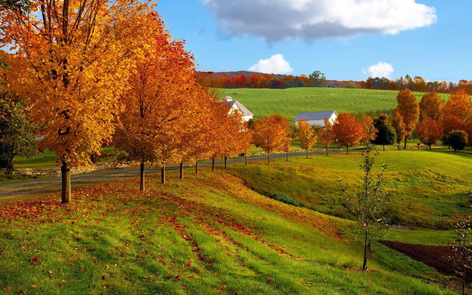 hintergrundbilder  herbst bäume gras 2560x1600