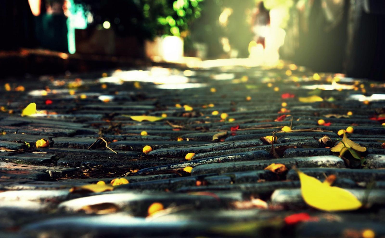 Sfondi luce del sole acqua riflessione erba giallo for Foto per desktop gratis autunno