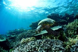 luonnollinen tantra-hieronta vesiurheilu