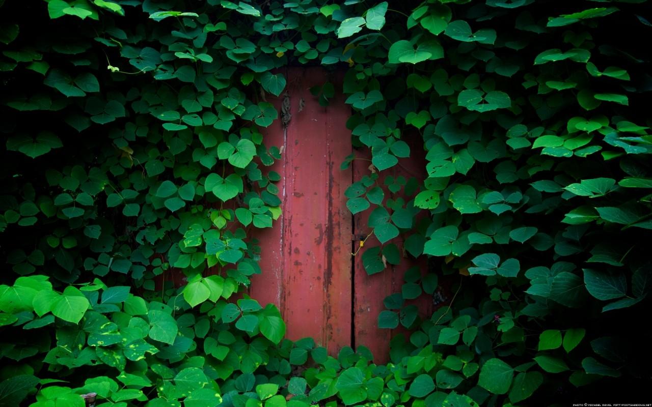 wallpaper sunlight forest nature green texture door jungle rh wallhere com