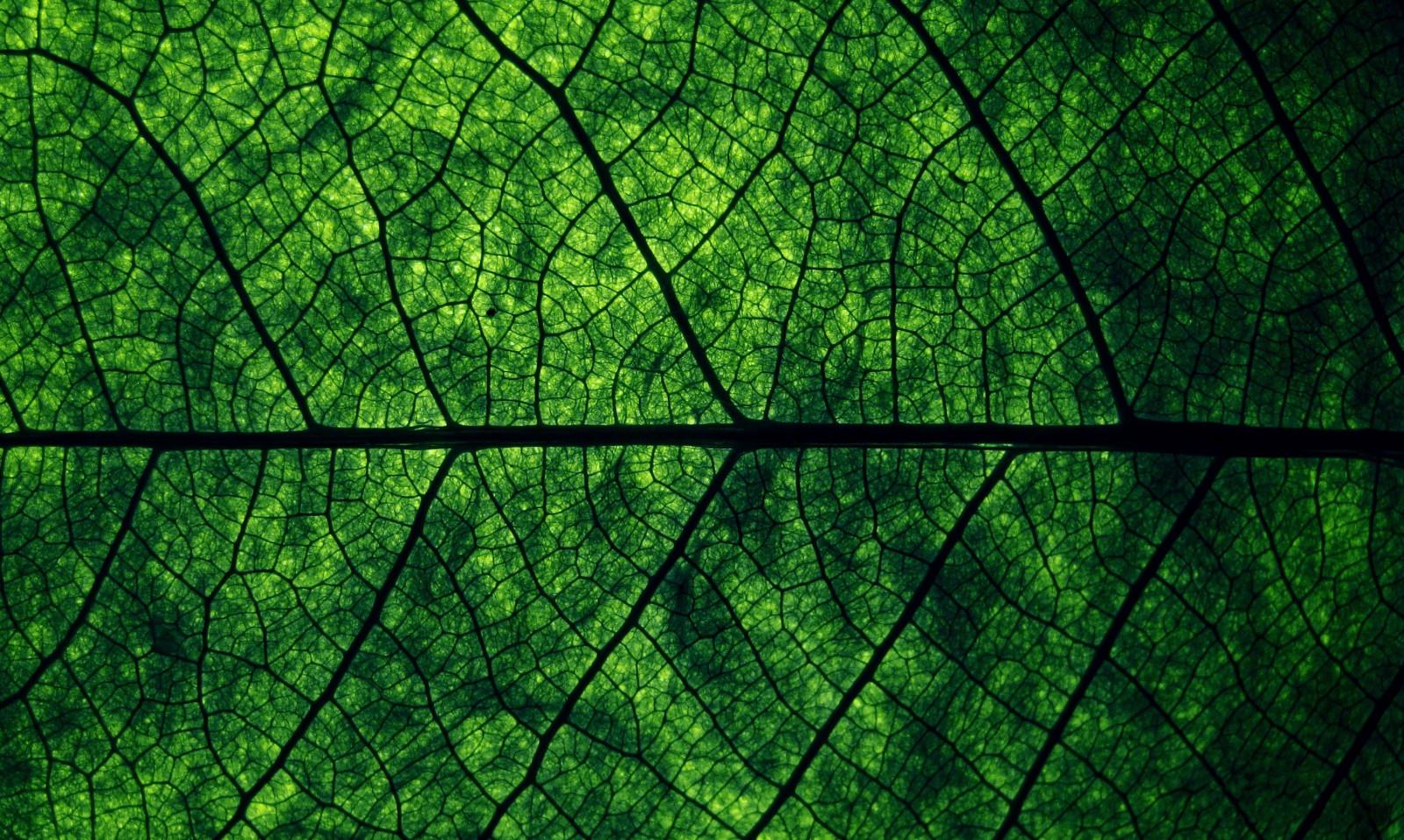 Fondos de pantalla : luz de sol, bosque, reflexión, Plantas, macro ...