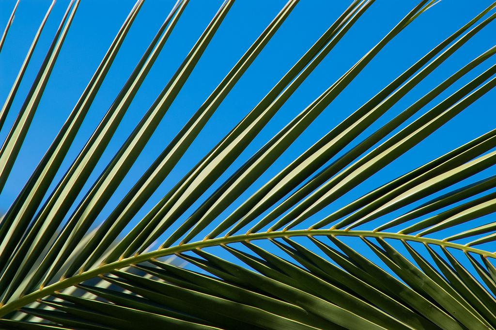 Fondos de pantalla : hojas, cielo, simetría, patrón, Portugal, árbol ...