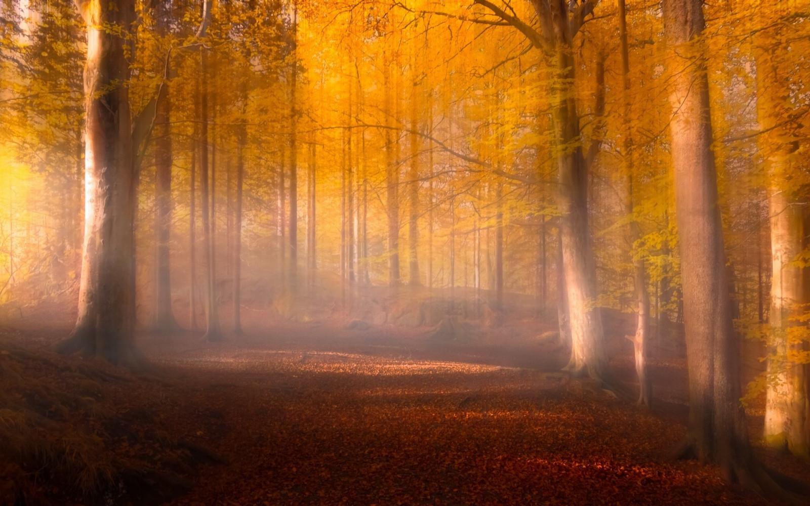Открыток, осеннее утро в лесу картинки
