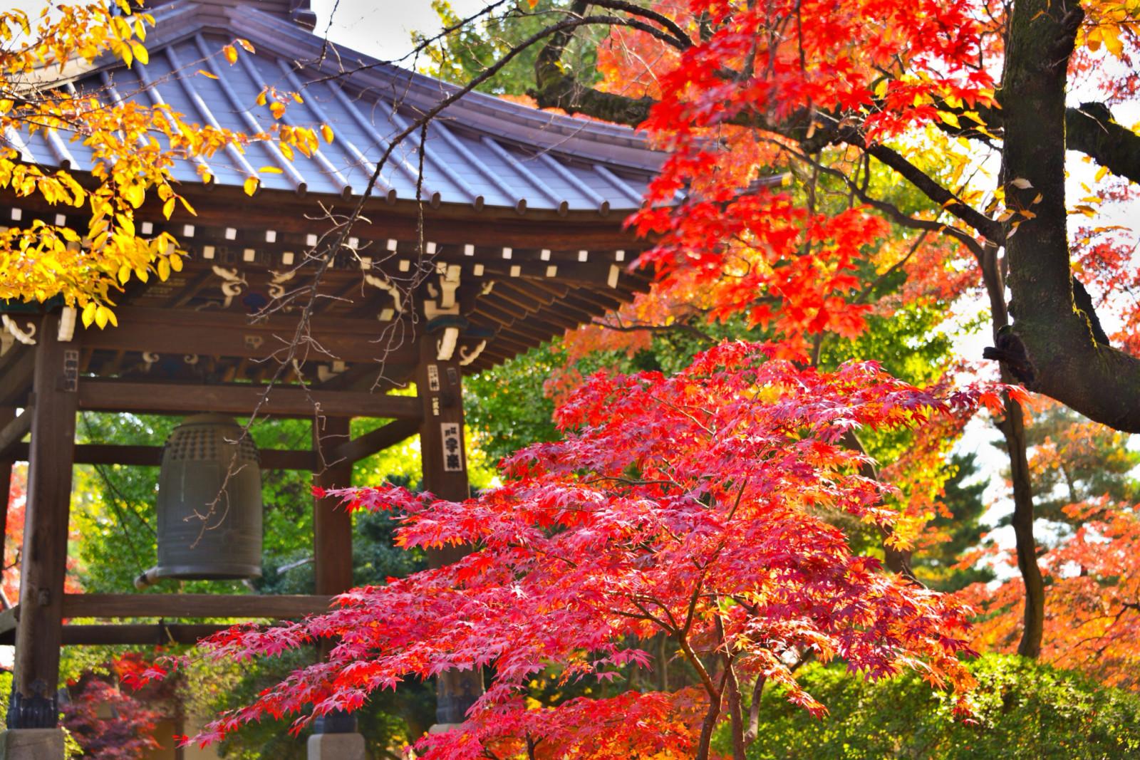 растительный и животный мир японии фото кого-то предматчевые разминки
