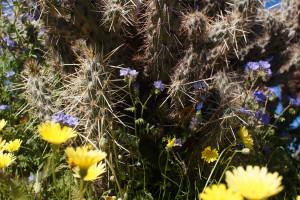 hintergrundbilder gras gelb w ste kaktus blaue blumen fr hling blume flora wiese. Black Bedroom Furniture Sets. Home Design Ideas