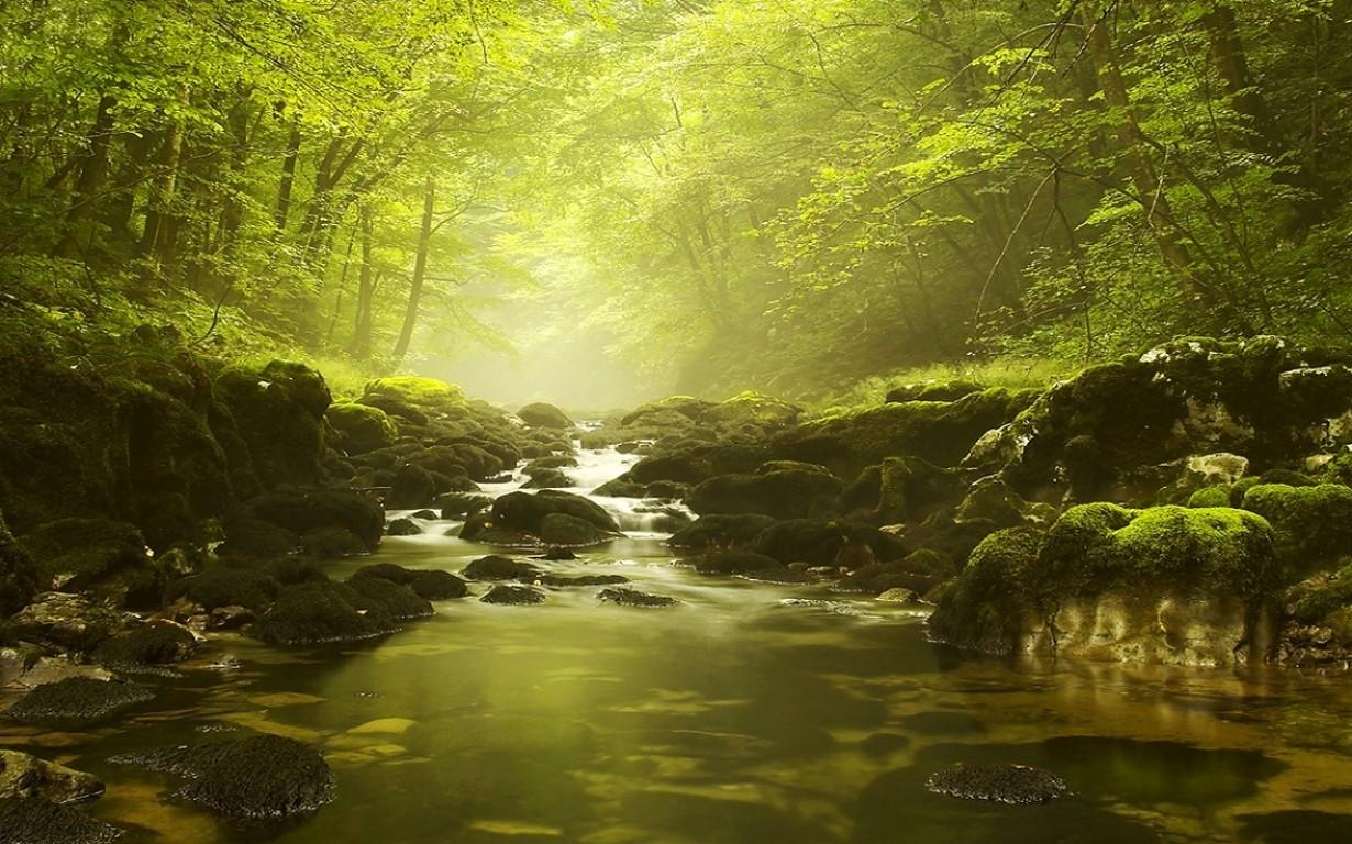 Wallpaper Sunlight Trees Landscape Waterfall Nature