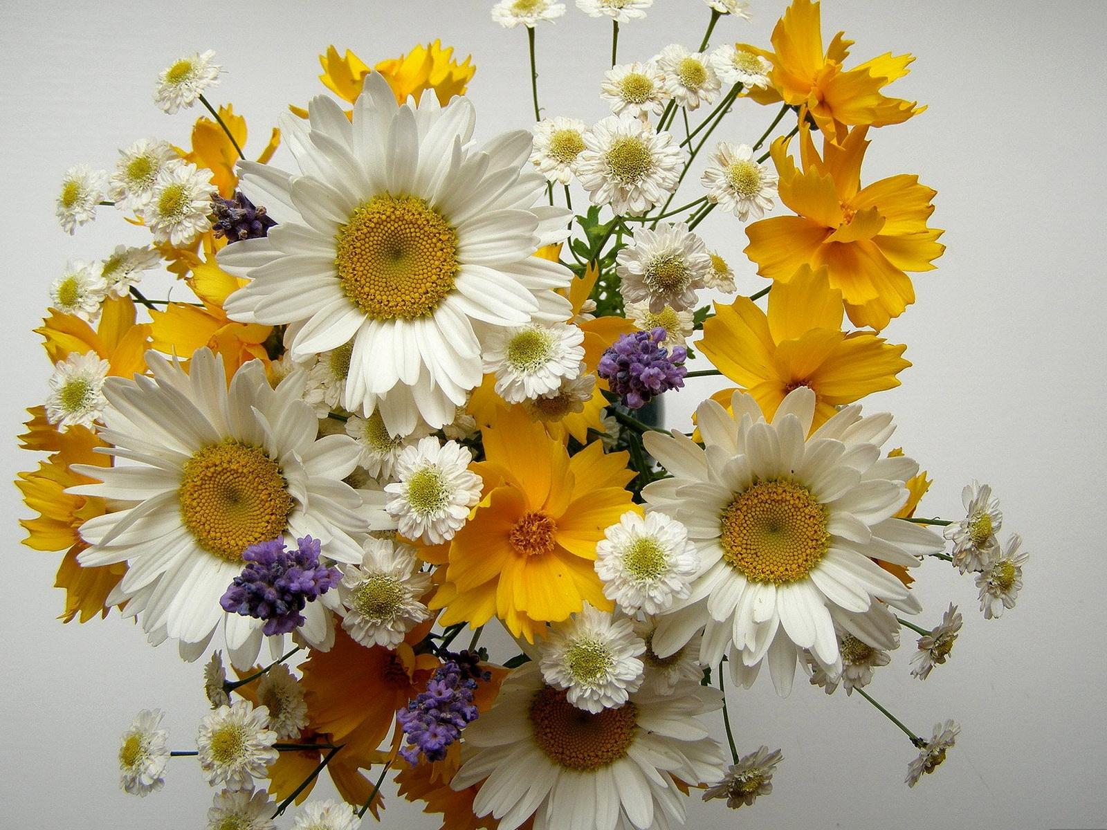 Fondos De Pantalla Flores Amarillo Manzanilla Ramos De