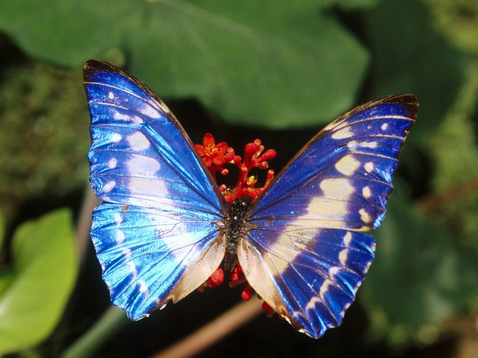 Картинки про бабочек больших