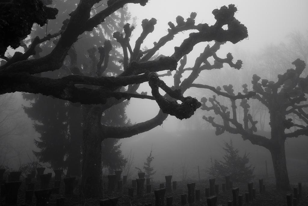 Entfernungsmesser Für Fotografie : Hintergrundbilder : sonnenlicht schwarz einfarbig fotografie