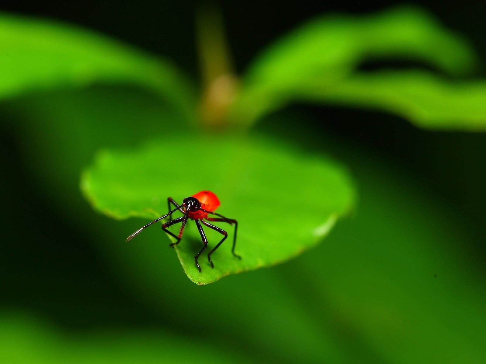 Resultado de imagem para insetos pragas