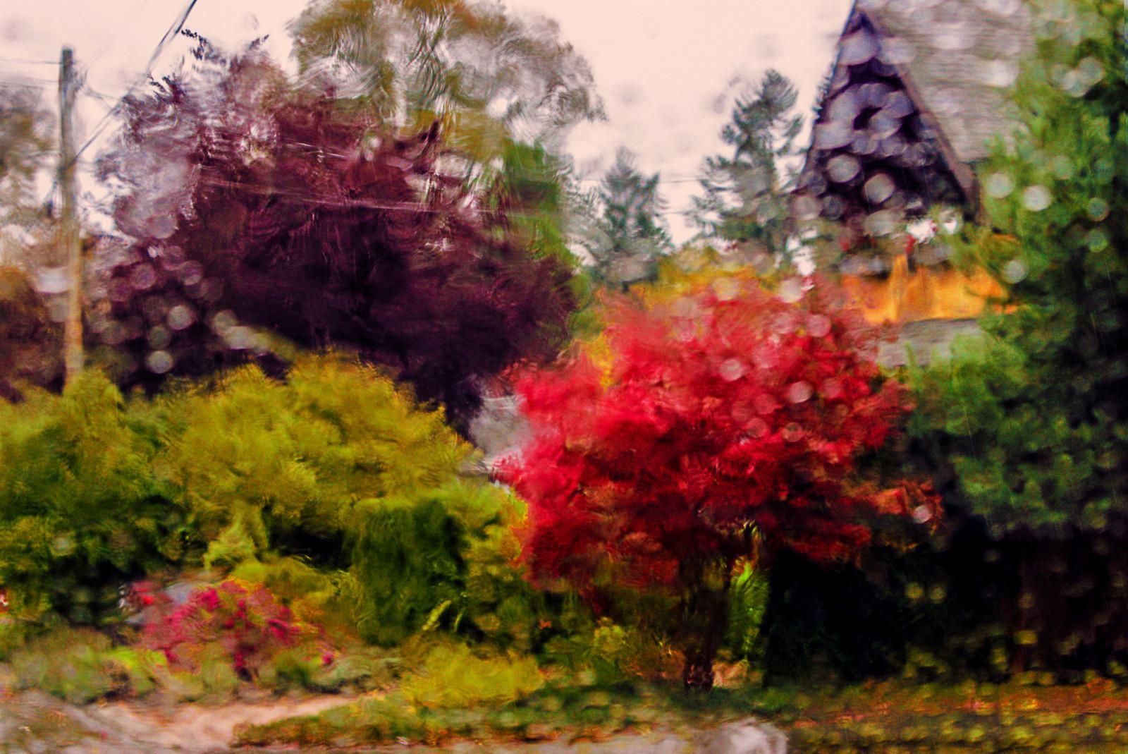 Fondos de pantalla rboles pintura oto o jard n for Arbol rojo jardin