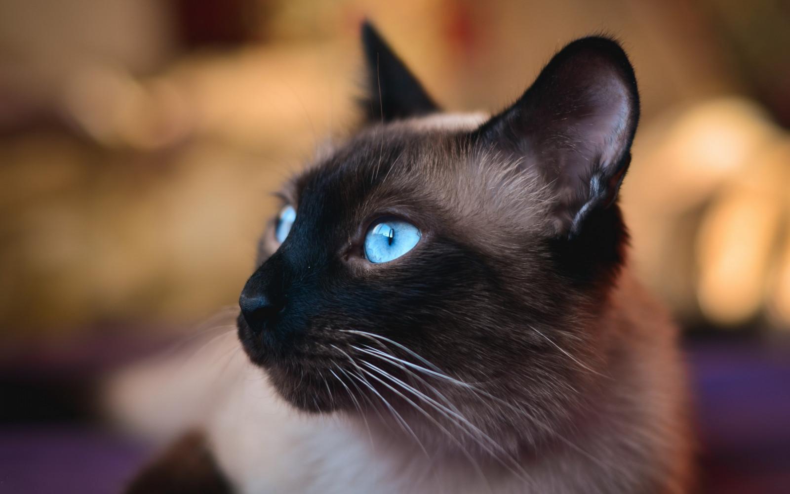 Black Kitten Pics