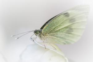 hintergrundbilder bl tter tiefensch rfe natur fotografie makro schmetterling insekt. Black Bedroom Furniture Sets. Home Design Ideas