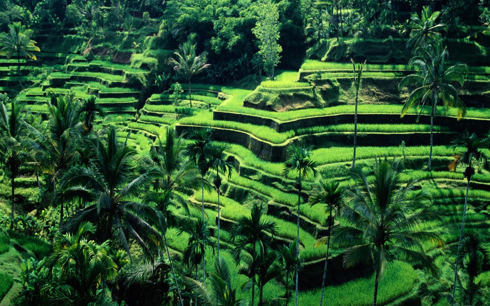 Sfondi Verde Giungla Bali Foresta Pluviale Indonesia