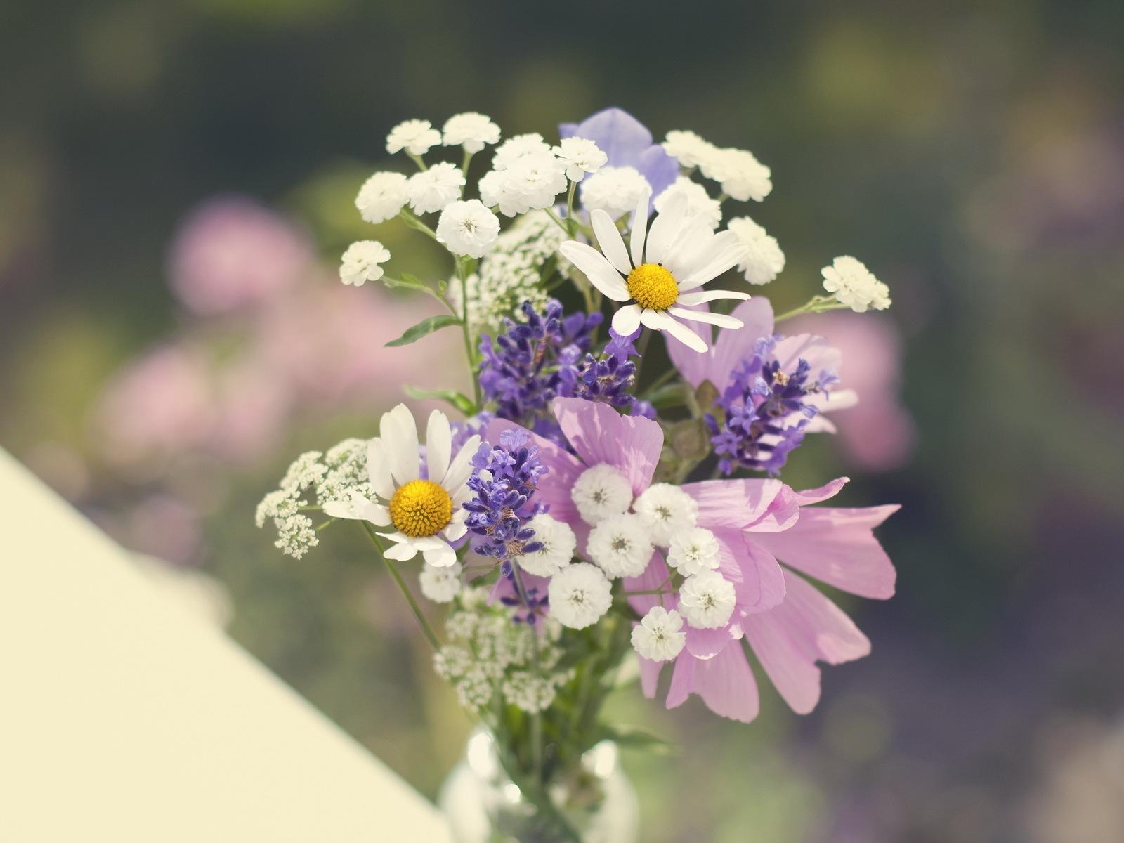 Papel De Parede Flores Natureza Campo Ramo Flor Margaridas