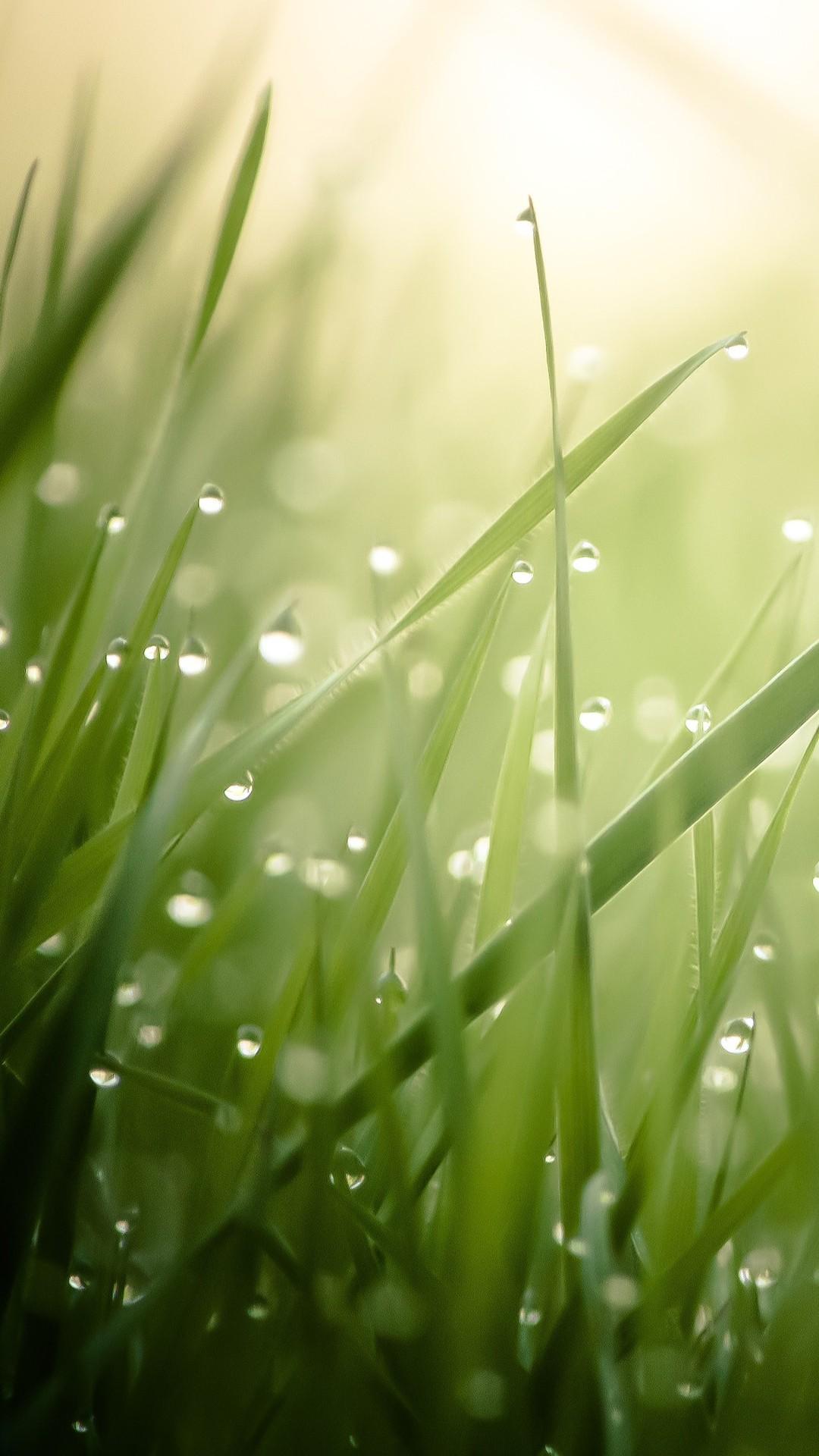 Wallpaper Sunlight Water Nature Branch Green Dew
