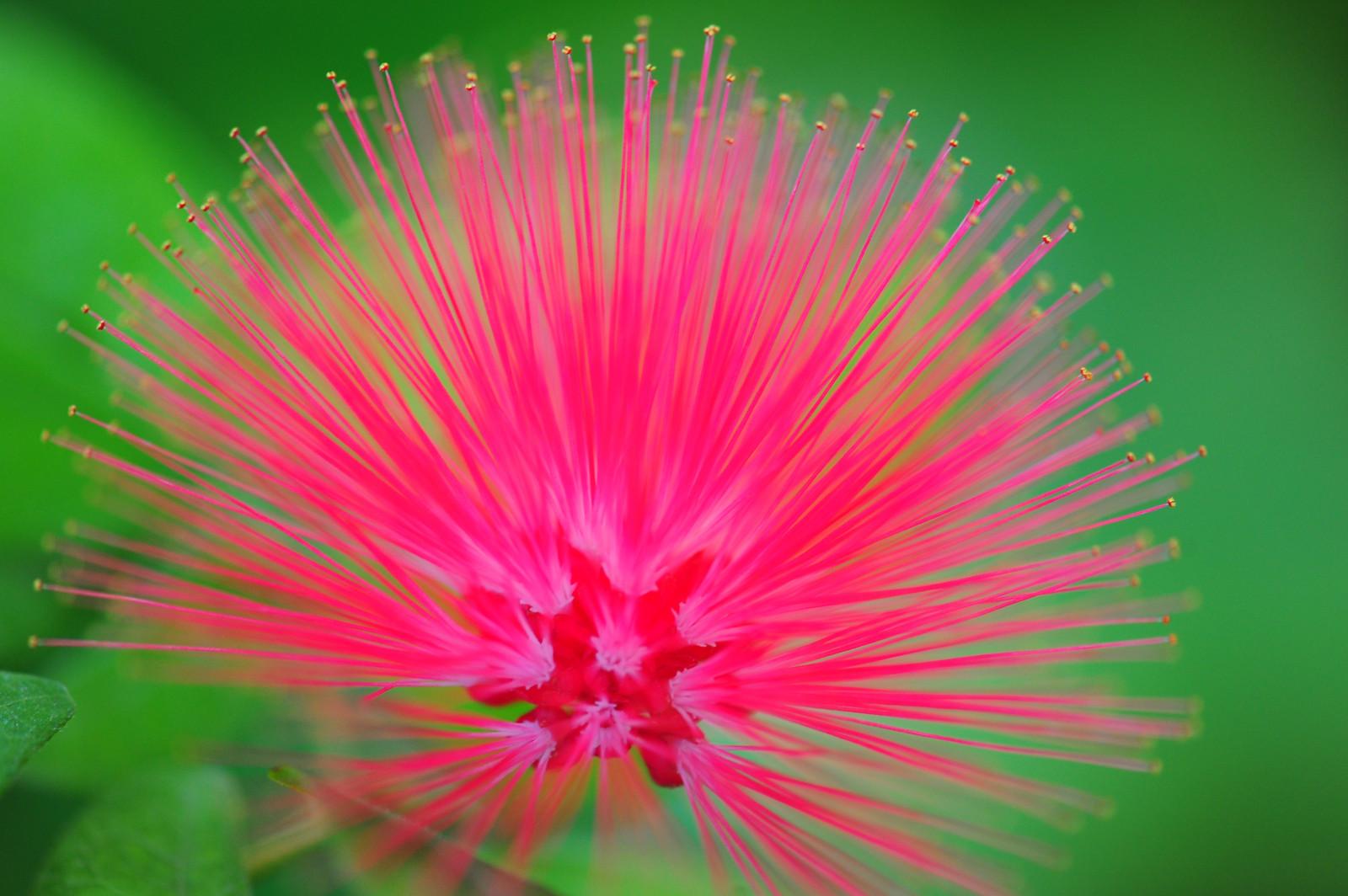 Wallpaper Flowers Plants Macro Gardens Nikon Pinkfloyd