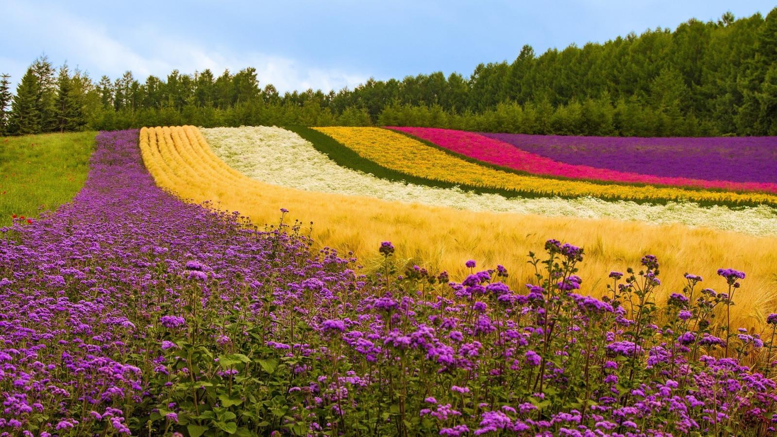 с поле цветами природы картинки