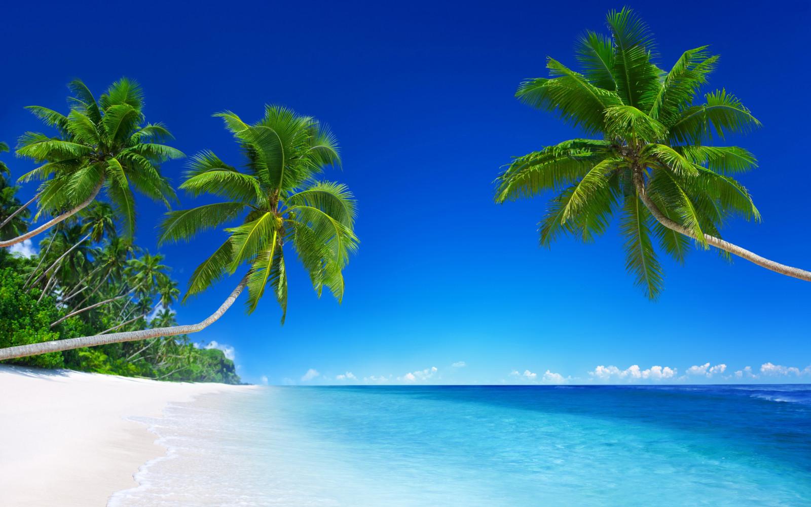 Fond d'écran : lumière du soleil, mer, ciel, côte, île, lagune, Caraïbes, Fond d'ecran, arbre ...