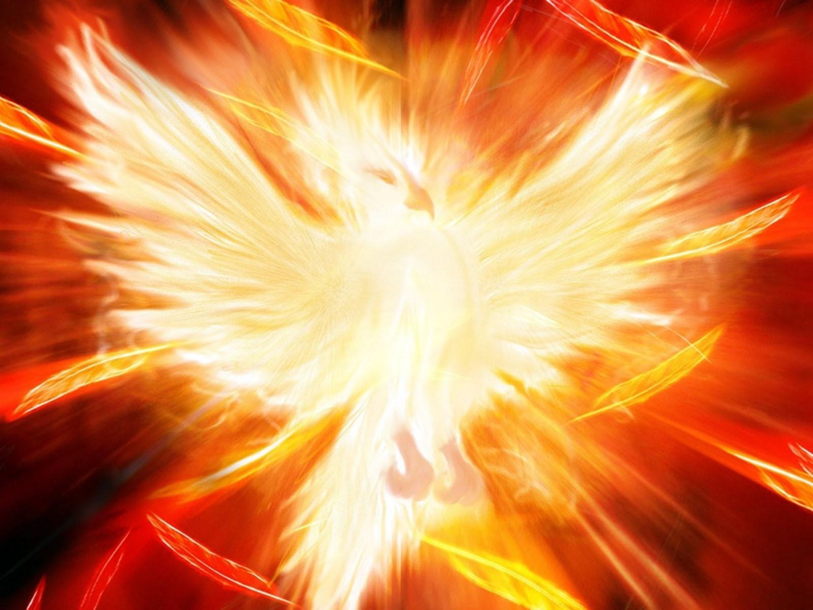 ♕ SPIRIT BRINGERS: EMPYREAN REALM. (SAGA DE BYNQUISTERR) - Página 21 Birds_fire_phoenix-139007