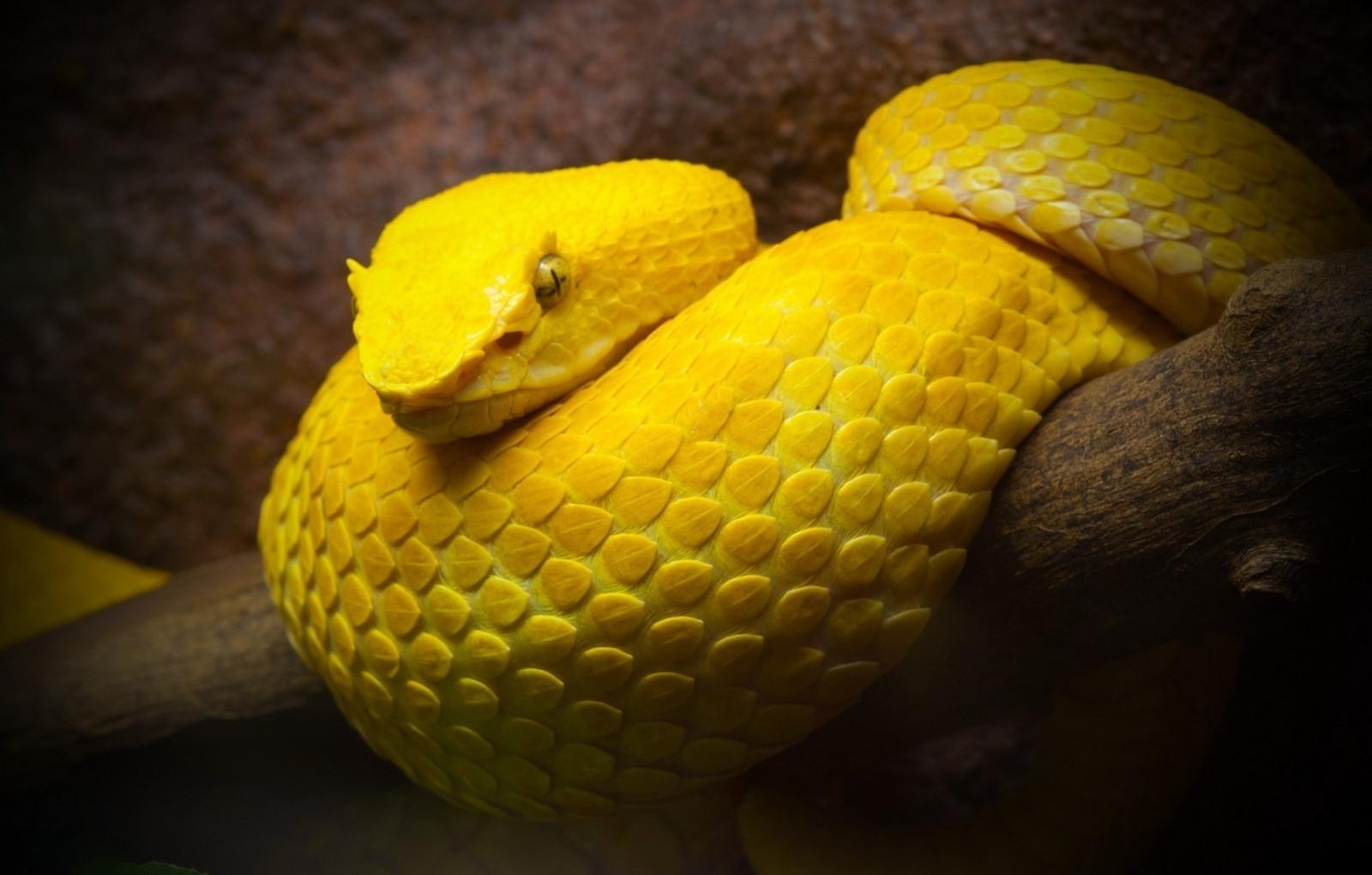 Змея гадюка цветов