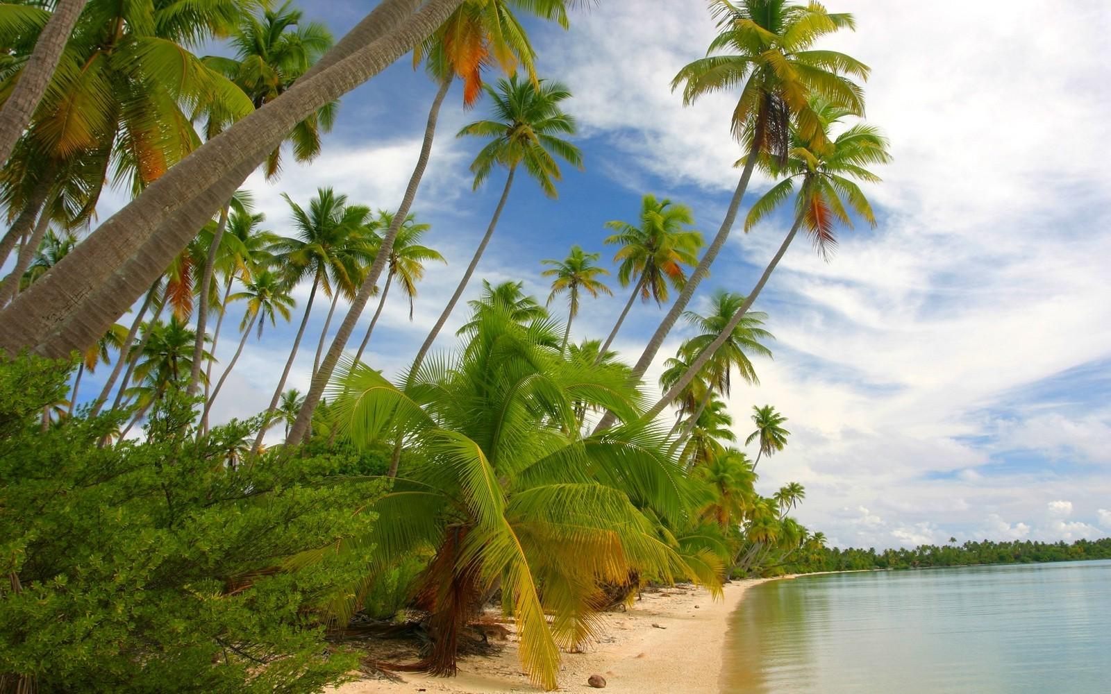 внимательно заполняется фото красивого леса с пальмами традиции