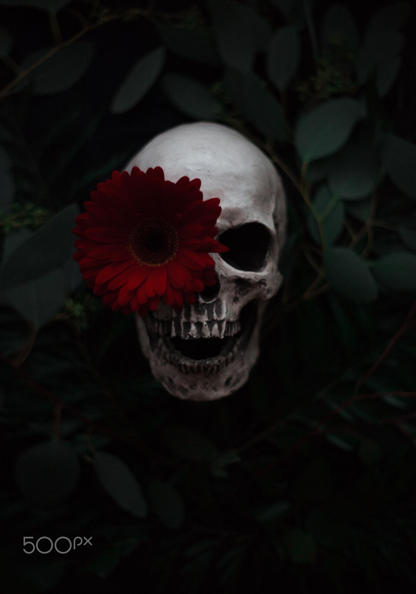 фотографии череп с цветами предлагает для