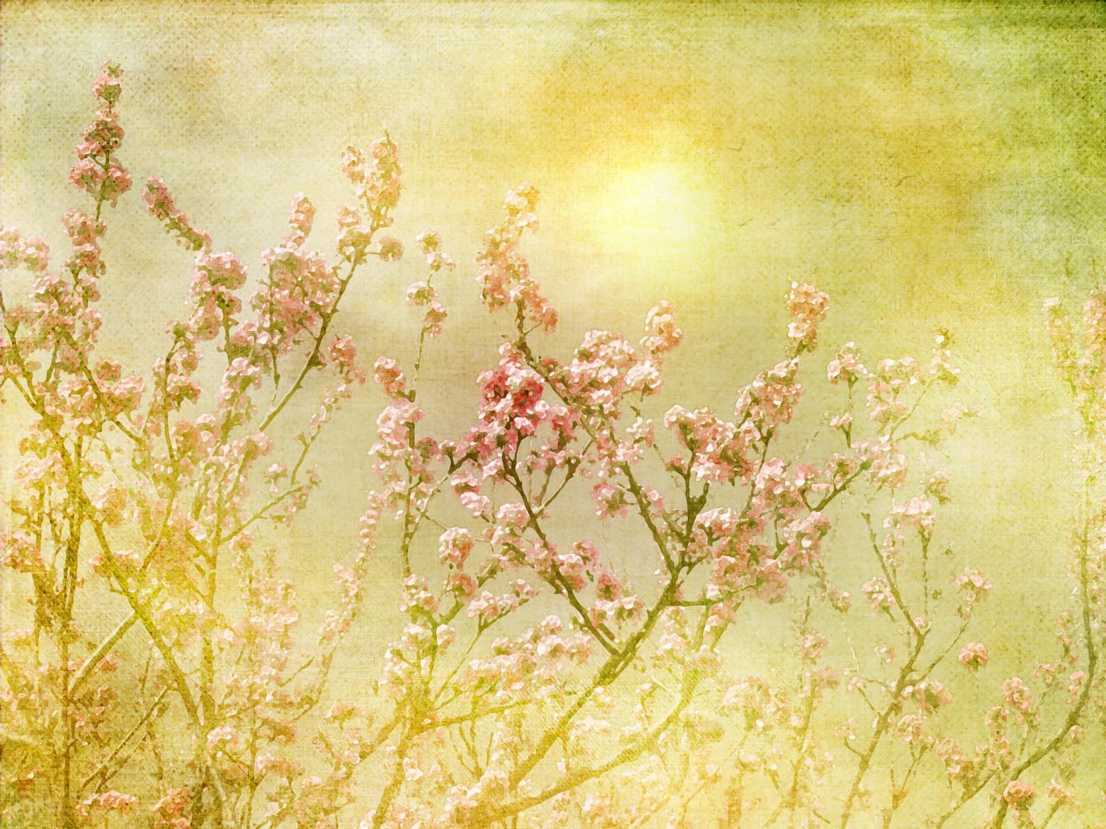 fond d 39 cran lumi re du soleil herbe branche matin texture fleur rose printemps sakura. Black Bedroom Furniture Sets. Home Design Ideas