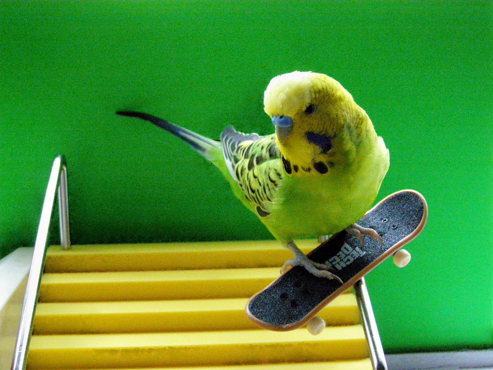 училась, работала, картинки на аву про попугаев актрисы помогла
