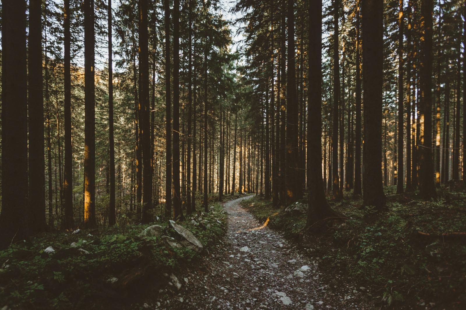 Wallpaper : hutan, alam, pohon, jalan tanah 5186x3457