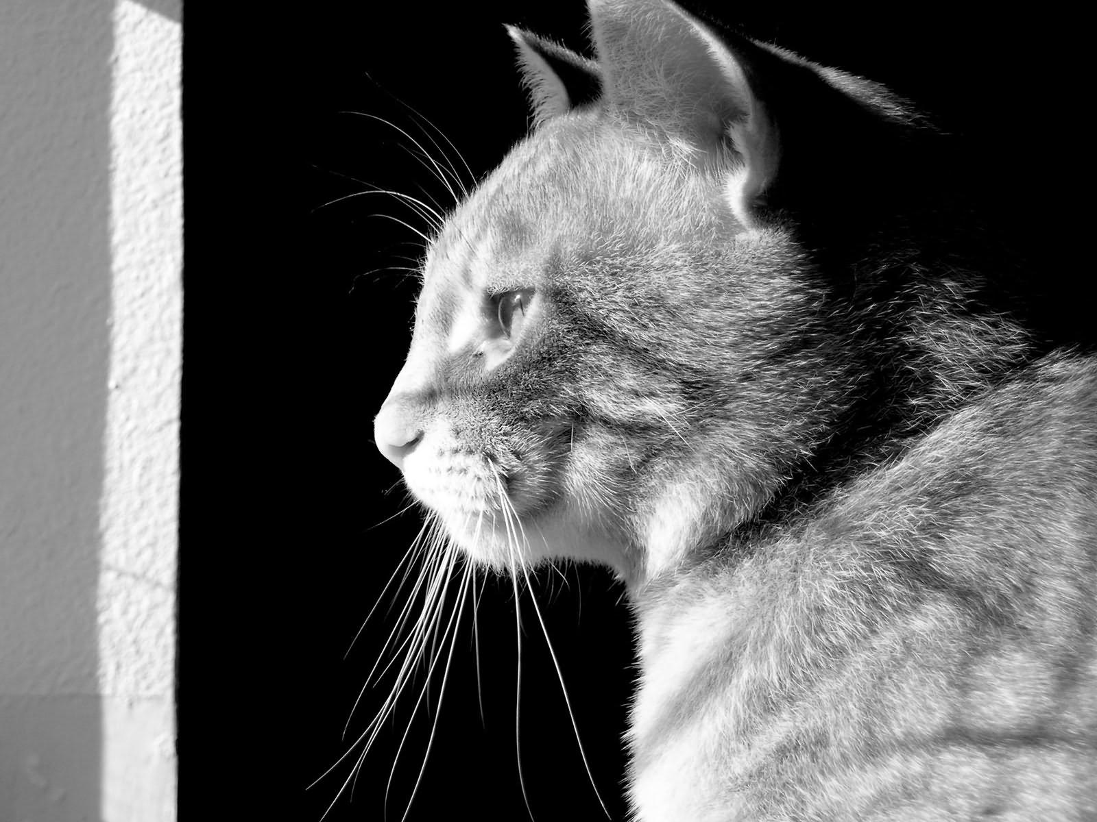 кот смотрит в даль картинки томатных