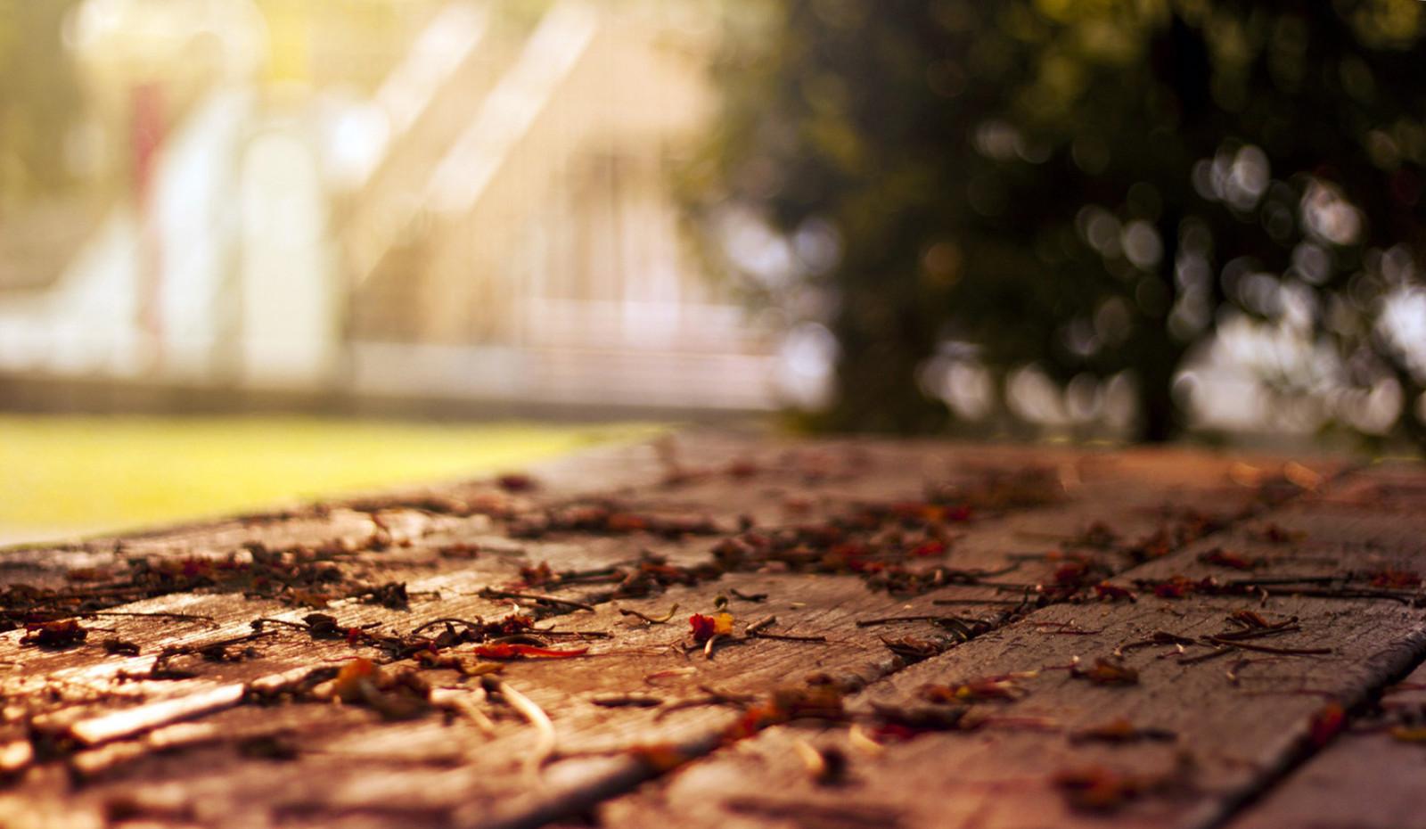 ... cỏ, Gỗ, các mùa, cây, Mùa thu, Lá, Phong cảnh, Cityscapes, Đất, Rụng lá, Hình nền mùa thu, 1764x1026 px, Hình ảnh thành phố, Hình ảnh tình yêu ...